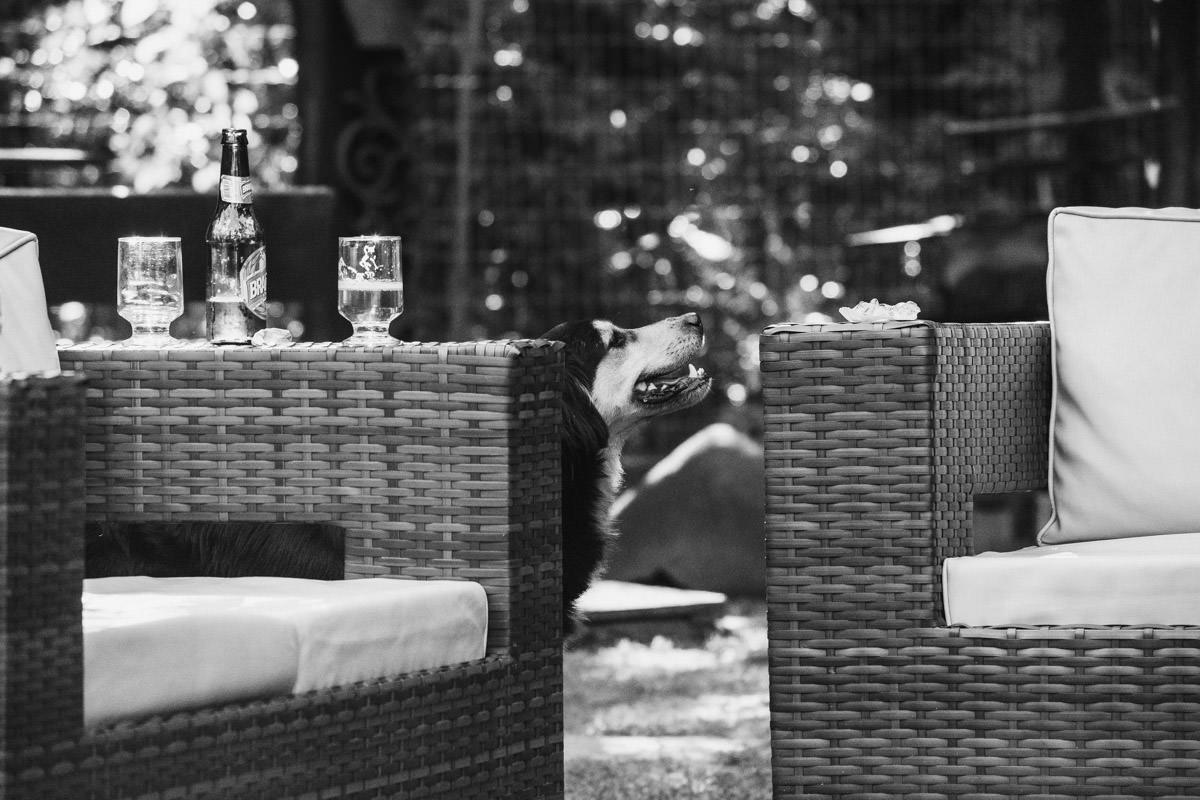 cachorro casamento em casa belo horizonte